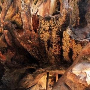 Sequoia & Kings Canyon National Park - GO2USA