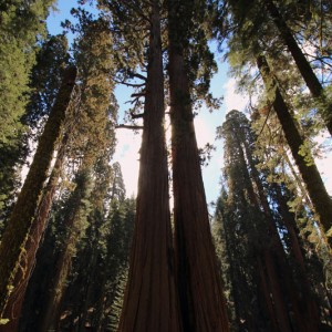 Sequoia & Kings Canyon National Park - GO2USA