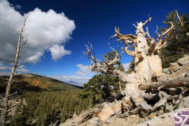 Great Basin NP - GO2USA