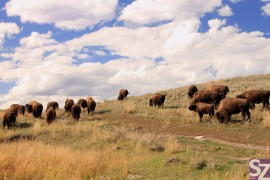Yellowstone National Park Fotogalerie
