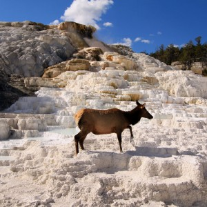 Yellowstone National Park - GO2USA